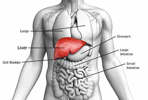 Liver function test blood test call meditest 7840811000 liver function test ccuart Image collections