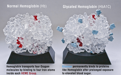 Glycated hemoglobin